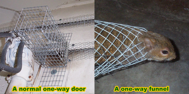 CAGE TRAPS & Humane Rat Trapping in Live Cage Traps - How to Avoid Killing or ...
