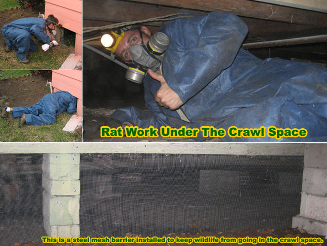 How To Remove And Get Rid Of Rats In The Crawl Space