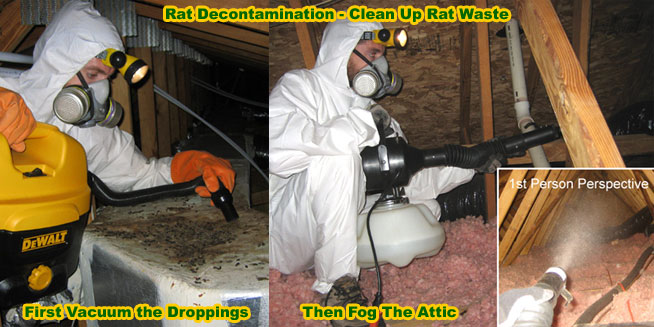 How to Clean Rat Feces, Urine, Waste, Poop, Mouse and Rodent