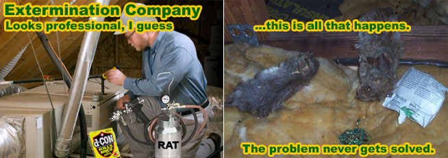 Rat Exterminator Mouse Mice Rodent Extermination