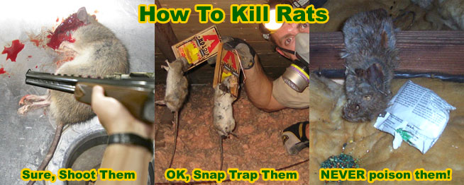 How to Poison Rats Effectively - Methods and Strategies