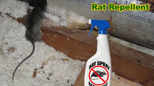 Rat Repellent An Analysis Of Mothballs Cat Urine