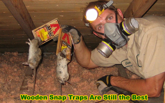 How To Trap A Rat Tips And Information On Trapping Rodents