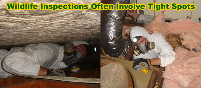 Rat Inspection How Are Rodents Like Rats Or Mice Getting