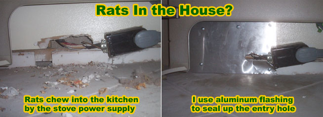 Rat Entry Holes Into House - Common Rat Entry Points